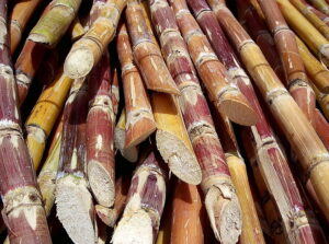 Brazil's top commodities: Sugar is widely cultivated in Brazil and exported as raw sugar.