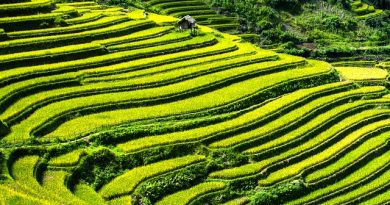 what-are-agricultural-commodities-rice-terraces