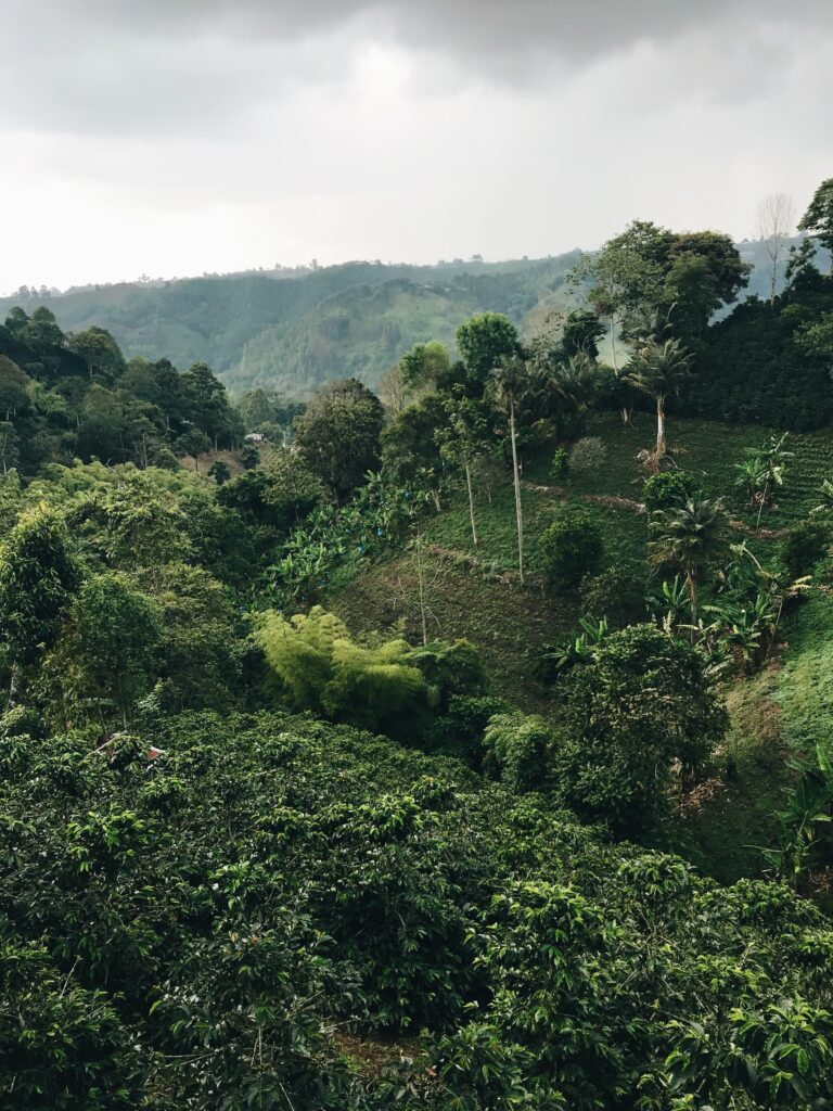 how-to-land-green-coffee-trading-jobs-coffee-plantation
