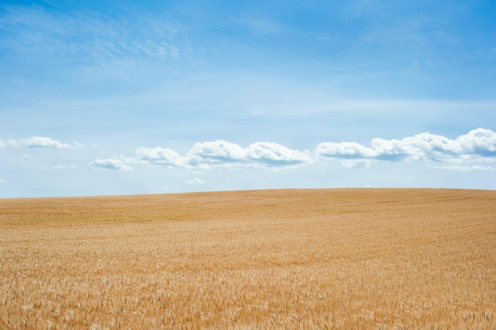 key-points-derivatives-wheat-field